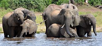 90 elefanter funnet døde med avhogde støttenner