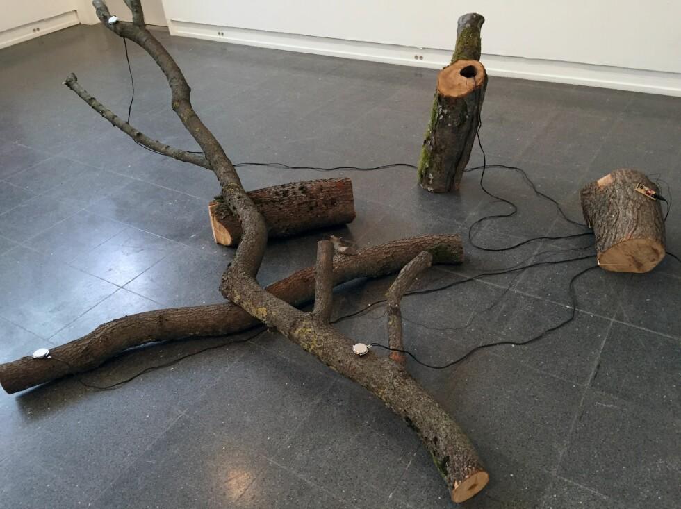 «TREVERK»: Joakim Blattmann har laget opptak av bevegelser i treets indre, og spiller de samme lydene av på små høyttalere som styres av den elektriske ledeevnen i stokkene. FOTO: ARVE RØD