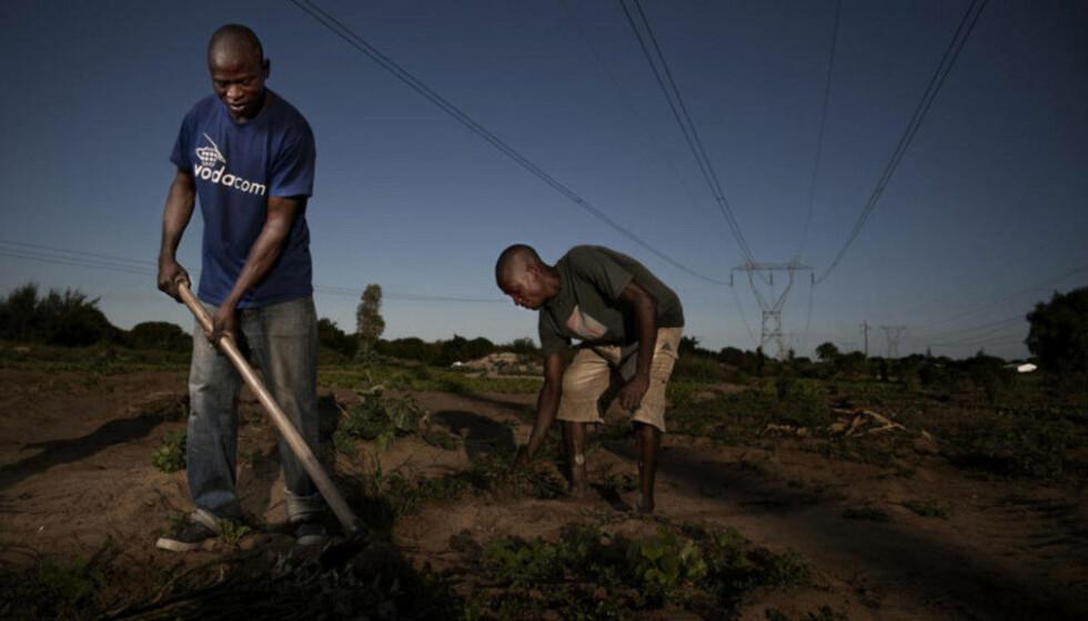 BISTANDSLAND: Mosambik er ett av to konkrete land som gås igjennom i KPMG-rapporten. I 2010 var Dagbladet i landet og skrev om bistandsprosjekter - blant annet besøkte vi bøndene Amslimo Alfredo Marrulmo (22) (t.v) og Insecio Tia (24). De jobbet som bønder i Matola, en provins i Mosambik. Noen meter bortenfor kålåkeren deres ligger et minefelt. Mosambik skulle være minefritt innen 2009. Foto: Sigurd Fandango