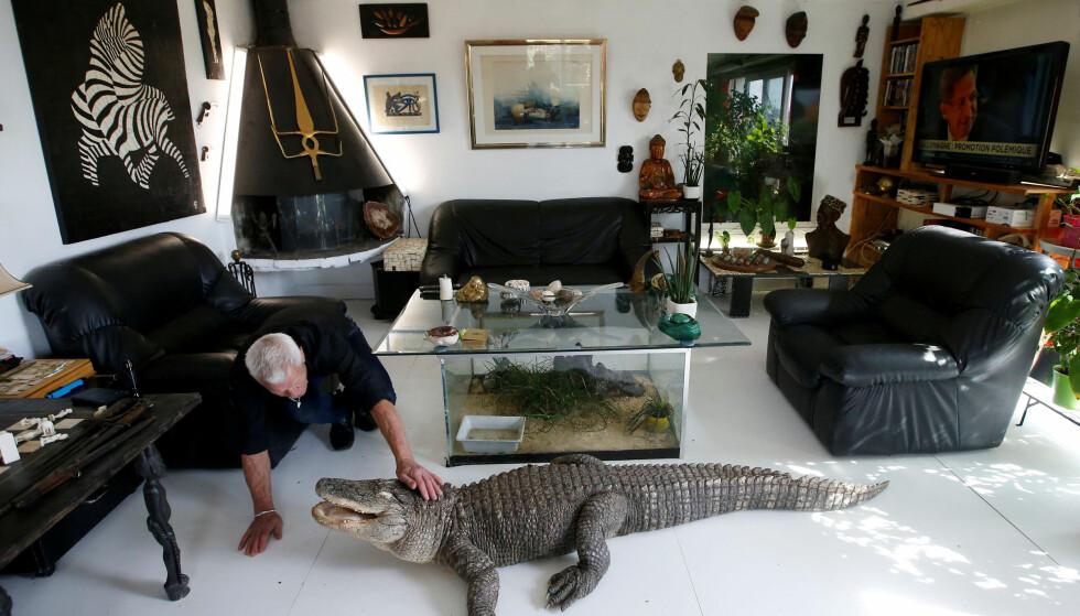 MENNESKETS BESTE VENN?: Phillippe Gillet bor med to alligatorer - og 400 andre reptiler. Foto: Reuters