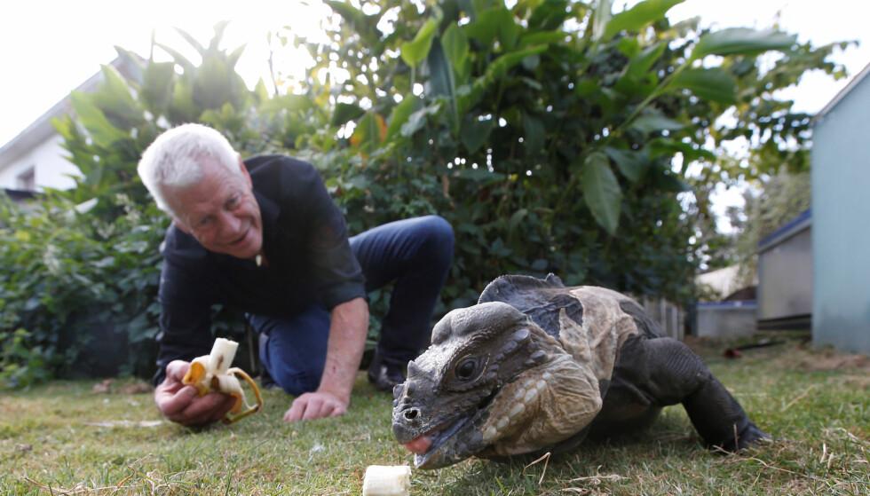 - Det må jo være en drøm å kunne bo med så mange reptiler, sier Are Hogner ved Oslo reptilpark. Foto: Reuters