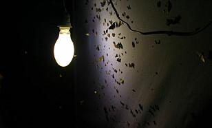 <strong>LURT AV LAMPA:</strong> For innsekter kan natt fort bli til dag når lampa er sterk nok og ikke slukkes.