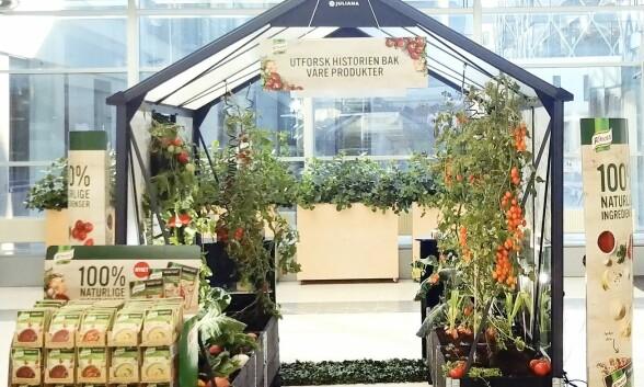 BYGGER VEKSTHUS: Nå setter Knorr opp et veksthus hvor du og din familie kan lære mer om hvordan maten din blir til.