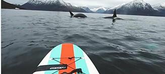 Kari fikk nærkontakt med spekkhoggere da hun dro ut i fjorden