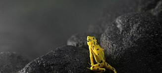 - Vi kan bli den første arten som dokumenterer vår egen utryddelse