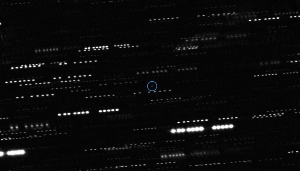 Et faktisk bilde av asteroiden 1I/2017 ('Oumuamua) som en liten prikk inni den blå sirkelen. Teleskopkameraet har fulgt asteroiden mens den har reist gjennom solsystemet, og stjernene rundt den danner derfor et stripemønster i bildet. Foto: ESO/K. Meech et al.