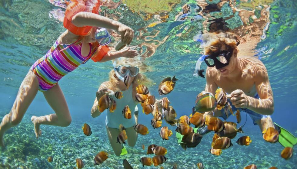 <strong>SNORKEL-PARADIS:</strong> Å snorkle på Maldivene kan være som å svømme i et akvarium. Barna elsker det. Foto: Shutterstock / NTB Scanpix