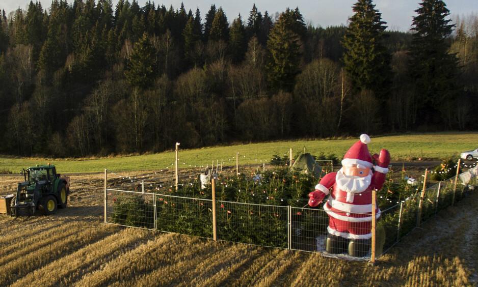 KVIT JUL: Om ti-femten år er truleg det «sentrale» Austlandet snøfritt til jul. Vil då redaksjonane tenka ut kalenderkonsept der ein i 24 episodar understreker at snø er avgjerande for ekte jul, spør innsendaren. Biletet er fra eit juletreutsal i Nittedal lille julaften i 2015, då heller ikkje austlandet fekk ønsket om ei kvit jul oppfyld. Foto: Tore Meek / NTB Scanpix