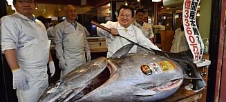 «Tunfisk-kongen» bladde opp 25 millioner for kjempefisk - det får ekspertene til å slå alarm