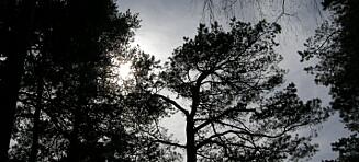 Mellom lys og mørke i januar