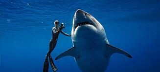 Bildene med «verdens største hai» går sin seiersgang, men nå får hun flengende kritikk