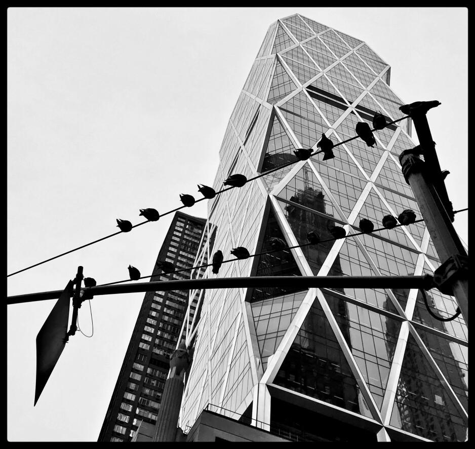FROSTDUER: Gatelangs i New York handler også om å se opp for det meste. Disse duene hadde morgenmøte om de viktige saker og ting som skjer i dagens onde verden der de også ønsker seg smuler fra de styrtrikes bord. Foto: Tom Stalsberg