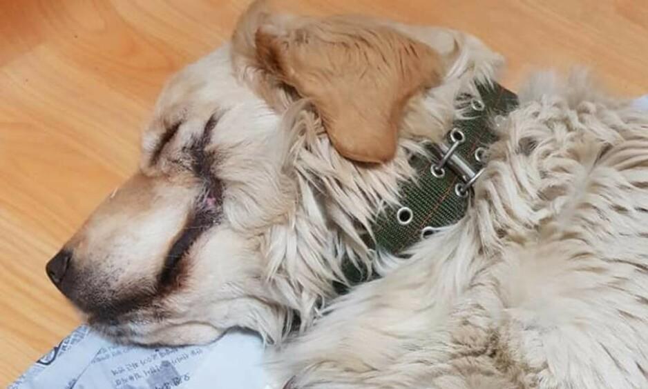 GROV MISHANDLING: Denne hunden ble funnet dumpet på en øde plass i Sør-Korea. Noen har skåret hundens munn opp på begge sider, slik at den ligner på Jokeren i Batman-filmene. Den var også hardt skadet på labbene og inni munnen. Foto: Viral Press