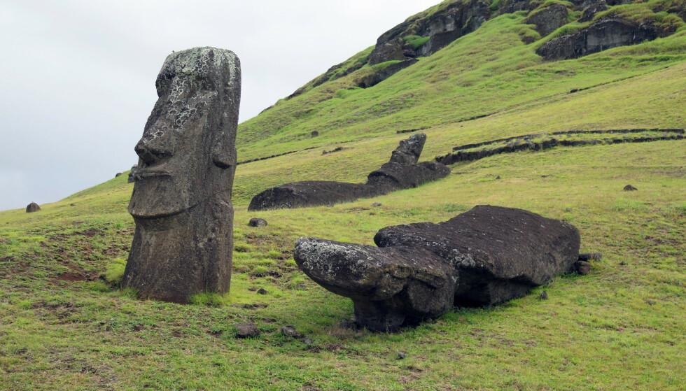 UNESCO-ARV: De mytiske figurene på Påskeøya trenger restaurering hvis de skal bevares. Bildet er tatt fra kong Harald og dronning Sonjas besøk til Rana Raraku - steinbruddet hvor alle skulptuene ble hugget ut. Foto: H.M.Dronningen / NTB scanpix
