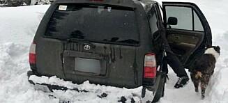 Mann og hund snøfast i fem døgn - overlevde på tacosaus