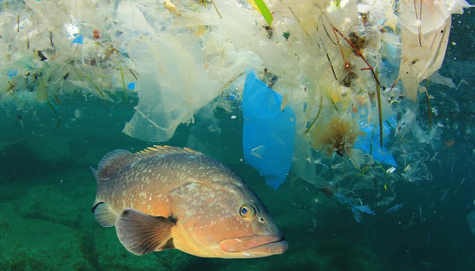 HARDT RAMMET: Konsekvensene for menneskers forurensning er store for livet i havet. Foto: Rich Carey/Shutterstock/NTB Scanpix