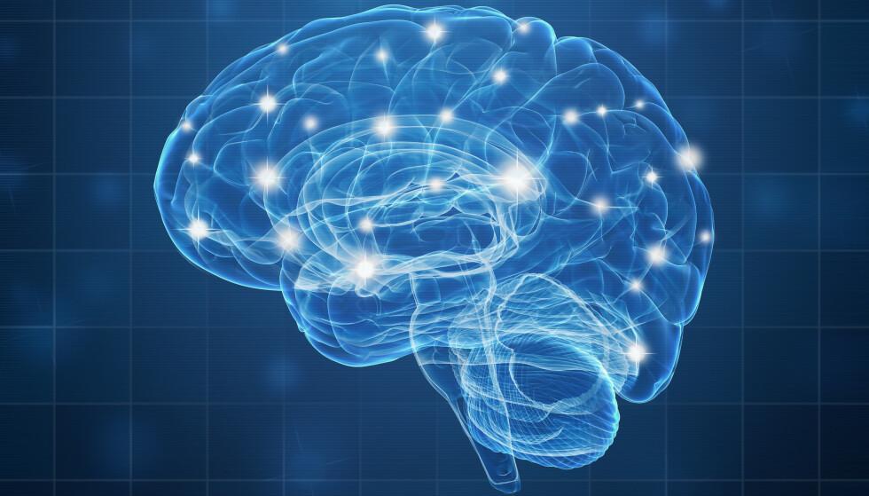 Hjerneforskernes beste tips