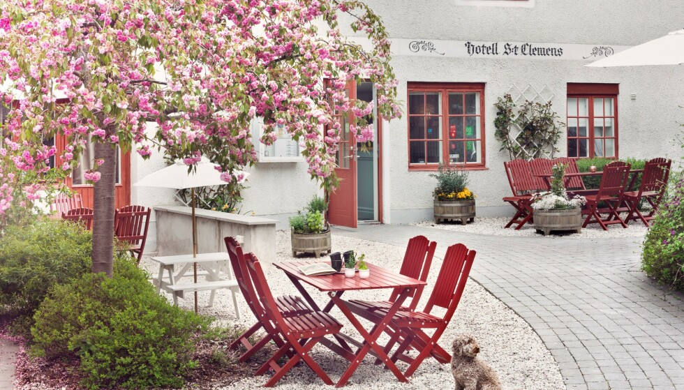 SPEKTAKULÆRE OMGIVELSER: På vandringene får du lære masse om Gotlands natur og historie. Foto: Hotel S:t Clemens