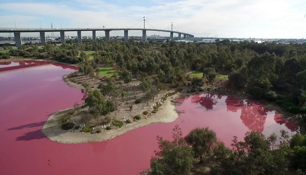 ÅRLIG FORANDRING: Innsjøen blir rosa hvert år når varmen stiger. Foto: NTB Scanpix