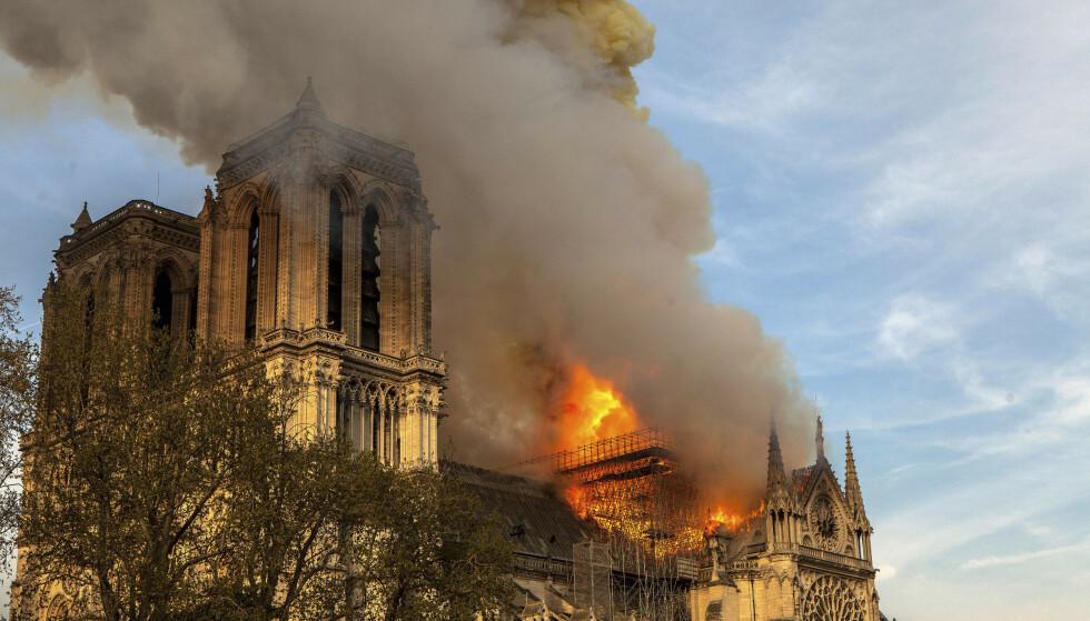 OVERLEVDE: Mandag kveld sto ærverdige Notre-Dame i brann. Biene som holdt til i katedralen, er imidlertid funnet i live. Foto: AP / NTB Scanpix