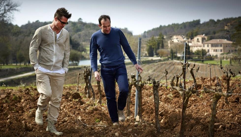 VINBONDE: Flere ganger i året besøker Brad Pitt den franske vingården han fremdeles eier sammen med eks-kona, Angelina Jolie. Her inspiserer han vinstokkene sammen med vinmakeren Marc Perrin. Foto: Miraval