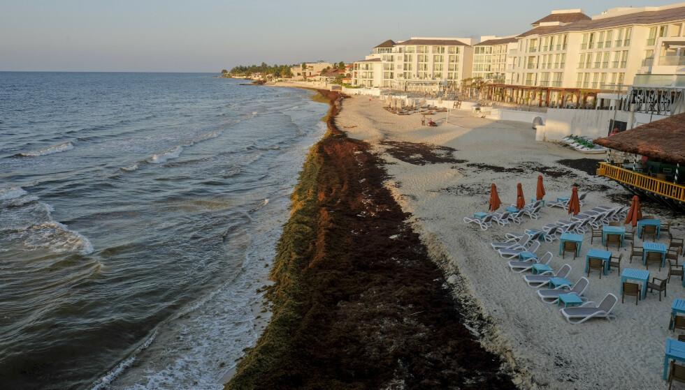ALGER: Stranda på Playa del Carmen i Mexico er fylt med alger. Foto: AP / NTB Scanpix