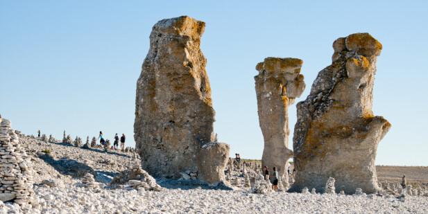 RAUKER: Gotlands kyststrekninger byr på kilometerlange sandstrender - og en og annen rauk. Rauk, sier du? Et restfjell fra istiden.
