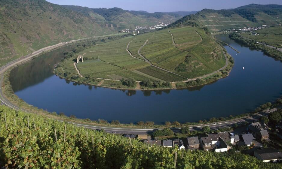 LANGS MOSELELVA: I de bratte hellingene langs elva ligger vinmarkene som produserer de anerkjente moselvinene. Foto: Shutterstock / NTB Scanpix