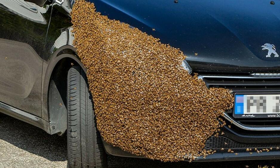 BIER: Eksperten anslår at det kan ha vært opp mot 10 000 bier på bilen. Foto: Nicolai Prebensen/N247.no