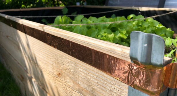 KOBBERTEIP: Sett teipen som en barriere på plantekasser, krukker etc. for å holde sneglene borte.