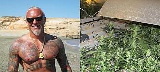 Slakter politiets cannabis-bevis mot Harnes