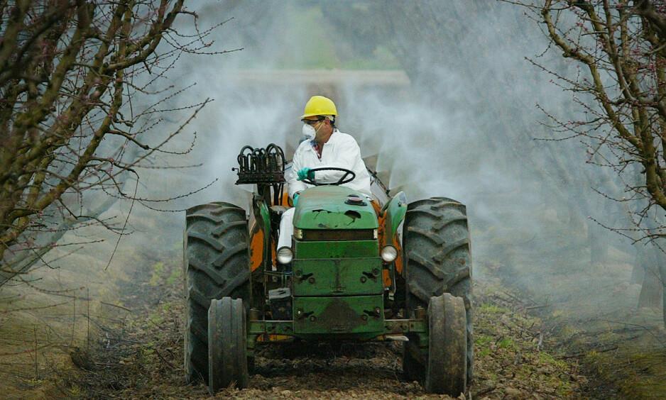 SPRØYTEMIDLER: Plantevernmidler brukes blant annet for å hindre insekter fra å ødelegge avlingen. Men ofte sprer giften seg til jordsmonnet og mennesker. Personen og gården på bildet er ikke omtalt i denne saken. Foto: GARY KAZANJIAN/AP Ntb/Scanpix