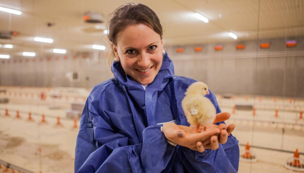 <strong>OPPTATT AV DYREVELFERD:</strong> - Vi som jobber i norsk kyllingnæring står på hver dag for å sikre kyllingen god dyrevelferd, skriver Margrethe Brantsæter, daglig leder i Norsk Fjørfelag, i dette svaret til veganer Kenneth Aar.