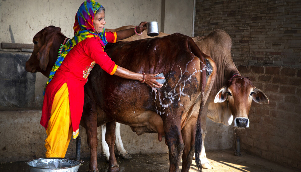GIFTFRITT: Sneh Yadaw driver økologisk gård i provinsen Rajasthan i India. For henne er gårdsdriften også en helt bevisst, politisk protest.