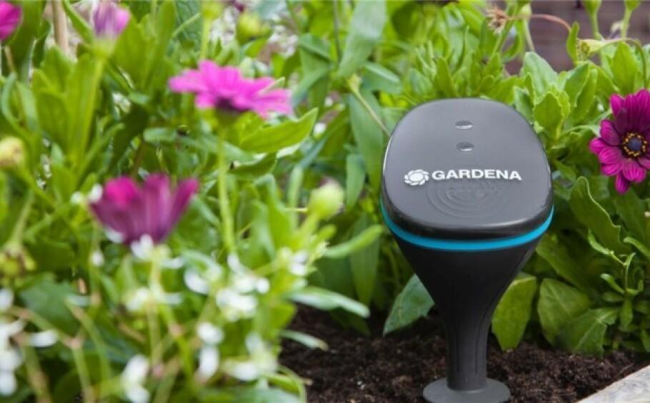 <strong>AUTOMATISERT:</strong> Denne sensoren måler jordfuktighet, lysstyrke og lufttemperatur. I tillegg forteller den deg nøyaktig når det trengs å vanne.