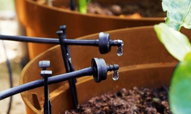 <strong>KLIMAVENNLIG DRYPPVANNING:</strong> Fordelene med dryppvanning er at jorden har lettere for å ta til seg vann når det tilføres sakte og dryppvis.