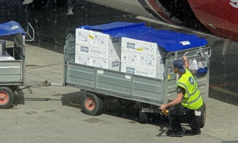 LAKS OM BORD: Her lastes store mengder med laks om bord flyet. Kort tid senere, måtte to personer og 50 bagasjer lastes av. Foto: Gaute Næss