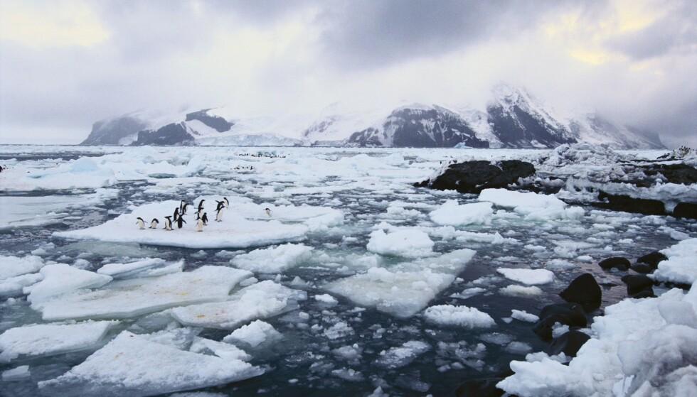 NYE ANALYSER: Nye analyser av satelittbilder viser en dramatisk nedgang i utbredelsen av havis i Antarktis mellom 2014 og 2017. Foto: NTB Scanpix