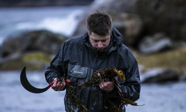SPIS MER TANG: Nicolai Ellitsgaard vil slå et slag for at du utforsker tang i sommer. Foto: Under