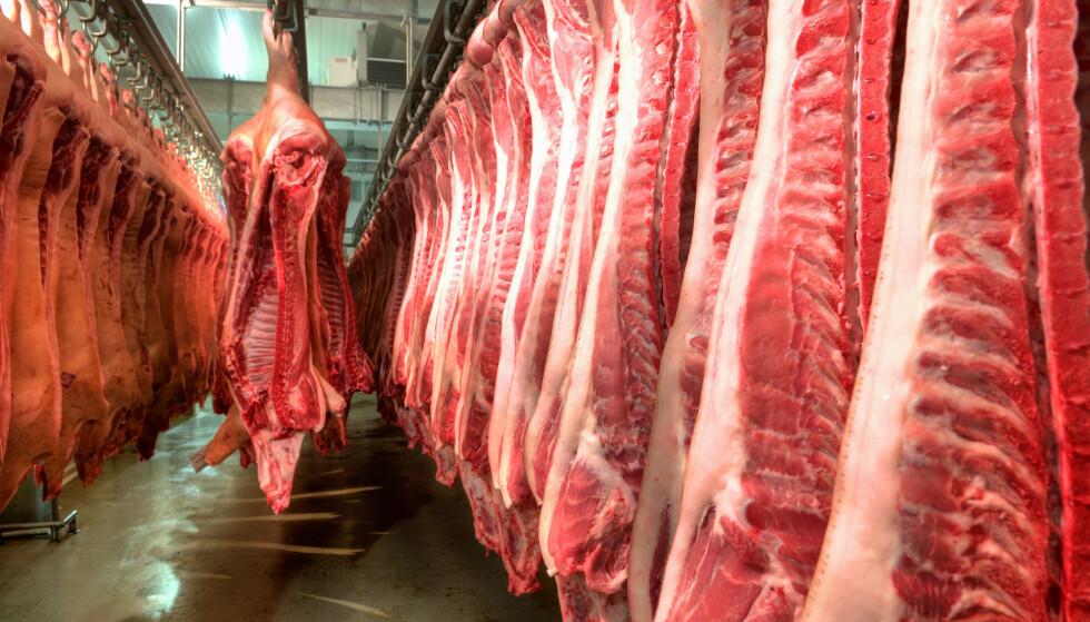 SLUKER KORN: I en verden der om lag en tredjedel av global kornproduksjon ble brukt til dyrefôr i 2017 bør norsk kjøttindustri lede an i en bærekraftig omstilling, skriver artikkelforfatterne. Foto: NTB scanpix