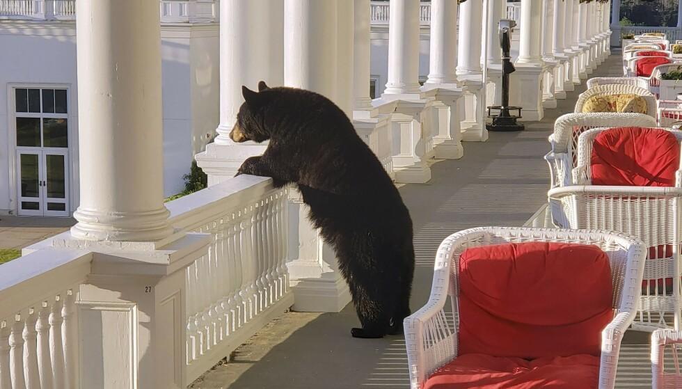 SVARTBJØRN: En hotellansatt klarte å fange bildet av en stor bjørn på verandaen i New Hampshire, USA. Foto: Sam Geesaman / AP / NTB SCANPIX