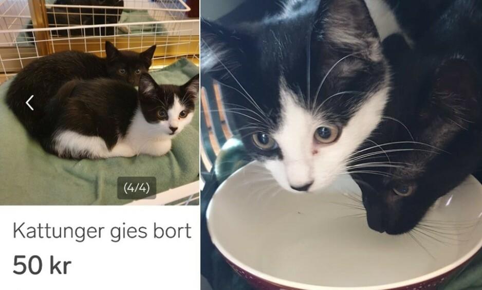 FORSØKT GITT BORT: Henriette Jessen mener at kattene på finn-annonsen til venstre, som ble forsøkt gitt bort eller solgt på finn.no noen dager i forveien, er de samme kattene hun fant forlatt i et bur i nabolaget på Grosåsen torsdag.