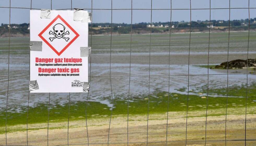 STENGT: Skilt som advarer mot giftig gass har blitt satt opp på stranda i Vallais, nordvest i Frankrike. Foto: Loic Venance / AFP / NTB Scanpix