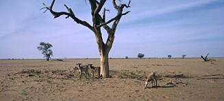 Sahels sårbarhet og stormen som kommer
