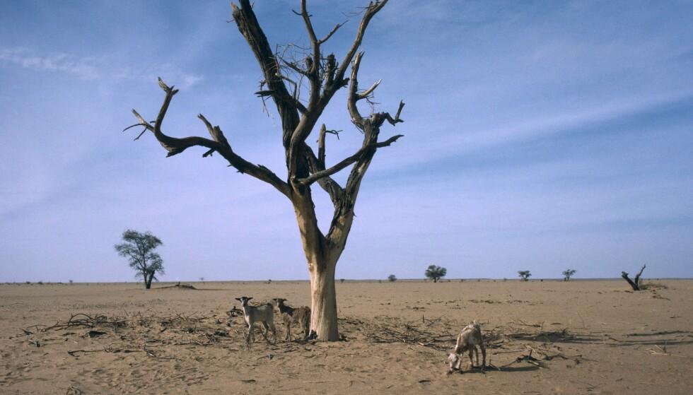 KLIMAENDRINGER: Mer ekstremvær og tørke, samt uforutsigbart regn truer livsgrunnlaget til Sahels befolkning. Foto: Eye Ubiquitous/REX
