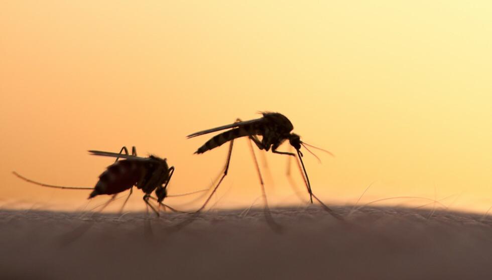BEKYMRER: Funn av en multiresistent malaria-parasitt bekymrer forskerne. Foto: mycteria / Shutterstock / NTB scanpix