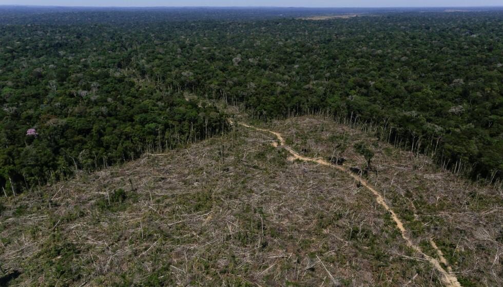 AVSKOGING: Hogst av trær i den enorme regnskogen Amazonas har tatt seg kraftig opp under president Bolsonaro i Brasil. Foto: REUTERS/Bruno Kelly/NTB Scanpix.