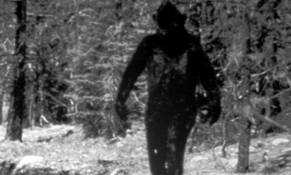 BIGFOOT: Den store apen som går på to bein er også kjent under navn som Den avskyelige snømannen, Yeti eller Sasquatch. Dette bildet fra California ble presentert som bildebevis på Bigfoots eksistens i 1977. Foto: AP / NTB Scanpix