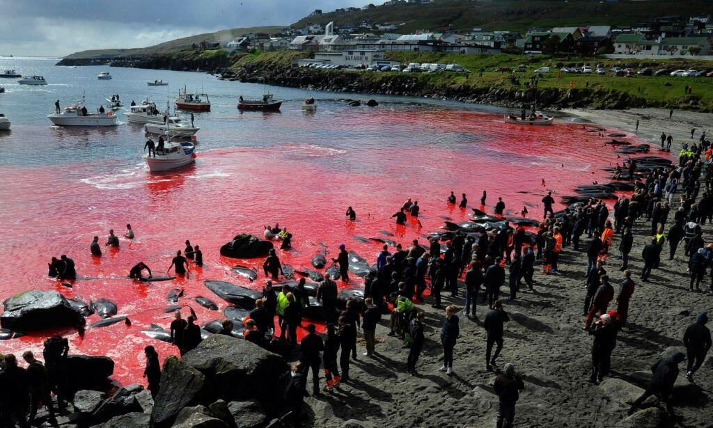 image: Hetser Norge med blodig video