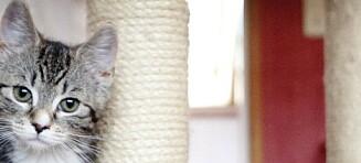 - Regjeringa somler med å få på plass dyrepoliti